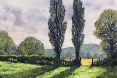 Herefordshire Poplars