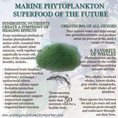 phytoplankton superfood