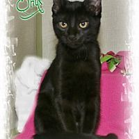 Shippenville, Pennsylvania - Domestic Shorthair. Meet Onyx, a for adoption. https://www.adoptapet.com/pet/18399422-shippenville-pennsylvania-cat