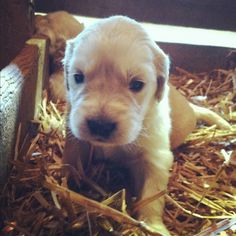 baby pup <3