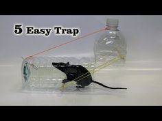 How to Make Plastic Bottle Mouse Traps Rat Trap Diy, Mouse Trap Diy, Best Mouse Trap, Diy Bottle, Water Bottle, Homemade Mouse Traps, Homemade Tools, How To Make Traps, Bird Trap