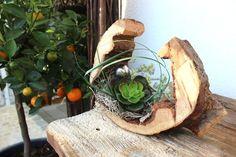 TD63 – Die etwas andere Tischdeko! Kirschbaumscheibe (thermisch behandelt und lackiert),dekoriert mit künstlichen Sukkulenten und einer kleine Edelstahlkugel! Preis 29,90€