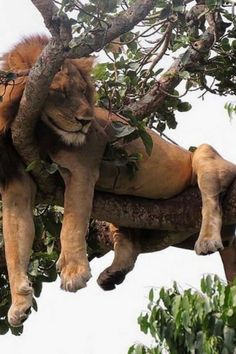 14 sleepy baby animals to sharpen your mind Animals And Pets, Baby Animals, Funny Animals, Cute Animals, Wild Animals, Nature Animals, Big Cats, Cool Cats, Cats And Kittens