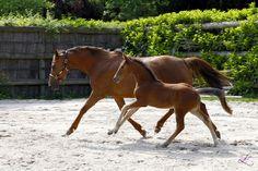 Darla Top filly foal by ZZ TOP 2013 www.teamlacroix.com
