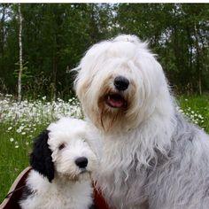 Love doggies