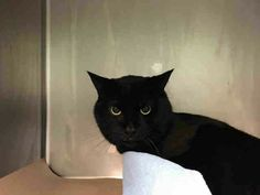 SOUP  - A1103806 - - Brooklyn  ***TO BE DESTROYED 02/20/17***  WHAT'S BETTER THAN SOUP ON A COLD WINTER DAY?  SOUP IS 8 YRS OLD AND NEEDS A HOME! -  Click for info & Current Status: http://nyccats.urgentpodr.org/soup-a1103806/