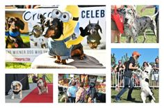 It's time to make plans to get to North America's Largest Outdoor Dog Festival. This year's Woofstock is going down May 28 and 29, 2016.
