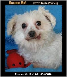 e ID: 14-11-03-00610Emma Maltese (female)  Maltese Mix  Age: Adult  Compatibility:Good with Most Dogs Personality:Average Energy, Average Temperament Health:Spayed, Vaccinations Current  Emma was born about December 5, 2007 and weighs about 10 lbs. She one incredibly gorgeous little girl. Every mill dog does best going into a home with another 'normal' dog. A woman that has befriended a group of millers in central New York has promised to see nothing, hear nothing, and say ...