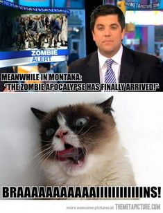 Funny pictures about Zombie Grumpy Cat. Oh, and cool pics about Zombie Grumpy Cat. Also, Zombie Grumpy Cat. Animal Jokes, Funny Animal Memes, Funny Animal Pictures, Funny Animals, Cute Animals, Funniest Animals, Animal Sayings, Animal Humour, Grumpy Cat Quotes