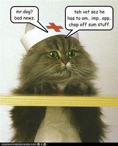 animal humor | Animal Humor Funny Cats