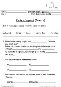 Science: Growing plants 1 | Worksheet | PrimaryLeap.co.uk Pre K Math Worksheets, Spelling Worksheets, Spelling Lists, First Grade Worksheets, English Worksheets For Kids, Student Learning, Teaching Kids, Plant Lessons, 6th Grade Science