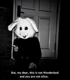 But my dear this is not Wonderland and you are not Alice