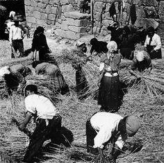 A malla | The threshing, ca. 1932