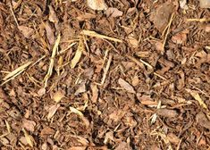 Kind of Mulch Is Good to Put Around Fruit TreesWhat Kind of Mulch Is Good to Put Around Fruit Trees Hydrangea Landscaping, Mulch Landscaping, Landscaping Ideas, Mailbox Landscaping, Garden Shrubs, Garden Trees, Tree Mulch, Growing Fruit Trees, Landscaping Around Trees