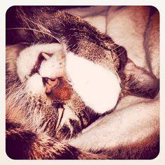 So sweet love #Cats