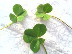 The Thriftiness Miss: A Real Lucky Four Leaf Clover Pendant Four Leaf Clover Necklace, Lucky Ladies, Weekend Projects, Saving Money, Plant Leaves, Clovers, Pendant, My Style, Plants