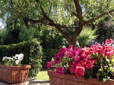 My garden | Flickr