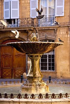 One of the most enchanting places i have been...Pigeons frolicking in the fountain at Place d'Albertas in Aix en-Provence. Photo: ©Brian Jannsen. Unauthorized use is prohibited.