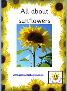 free download for sunflower unit. lots of great resources too!