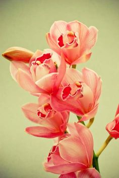 coral orchards flowers | Vintage Botanical . coral pink orchid print . flower photography ...