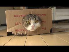 "(BGM: フリー音楽素材MusMus 様より  http://musmus.main.jp/)  誕生日の特別企画として、2011年のビデオを使って作りました。As a special plan of Maru's birthday, I made ""I am Maru 4."" with videos of 2011."