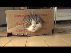 A Cat's perspective. What a life! Meow! Maru on the prowl! まるです4。- ( I am Maru 4.-:)