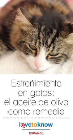 20 Ideas De Cats Hotel Para Gatos Lenguaje De Los Gatos Gatos