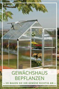 Gewächshaus bepflanzen: Hier finden Sie eine praktische Anleitung für die richtige Bepflanzung des Gewächshauses. #garten
