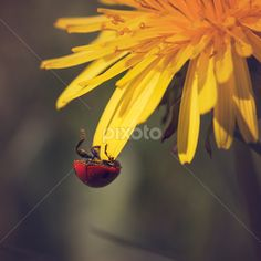 by Ahmad Torabi - Animals Insects & Spiders