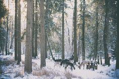 Damwild im Wildpark Landsberg am Lech. Hirsch Wald