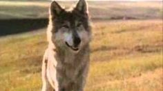 Two socks in Dances with wolves 1990