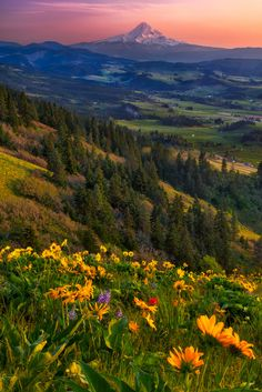 Spring In Hood River Valley by Michael Brandt on 500px