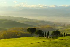 Trees and Hills of the Tuscany by Mark Sivak on 500px