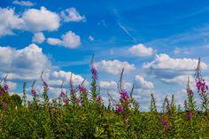Summer landscape Summer Landscape, Amazing Photography, Nature, Travel, Beautiful, Naturaleza, Viajes, Destinations, Traveling