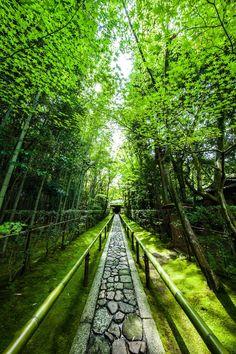 Daitoku-ji Temple, Kyoto, Japan #Kyoto #緑 #Green 東京カメラ部 Popular:You Iwata