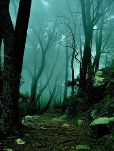 imagenes de bosques encantados de noche