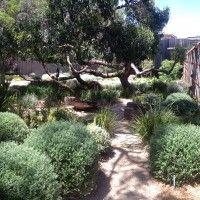 Ocean Road Landscapes - award winning garden 2014 - plants