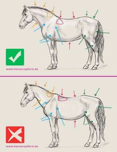 The most important role of equestrian clothing is for security Although horses can be trained they can be unforeseeable when provoked. Riders are susceptible while riding and handling horses, espec… Horse Riding Tips, Horse Tips, Horse Drawings, Animal Drawings, Arte Equina, Horse Information, Horse Exercises, Horse Sketch, Horse Anatomy