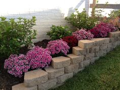 Dianthus brings pinks and reds to the front of the flowerbed to accent the Strawberries and Cream hydrangea that will bloom later.