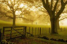 Cornwall Park, Auckland - Mike Hollman Photography