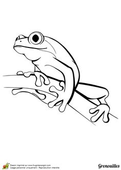 Vector Illustration Black and White Frog Learn Watercolor Painting, Watercolor Print, Simple Line Drawings, Simple Animal Drawings, Frog Illustration, Frog Drawing, Frog Tattoos, Coloring Books, Coloring Pages