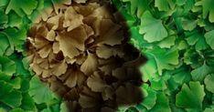 Τα τελευταία χρόνια οι επιστήμονες καταγράφουν σημαντική αύξηση του αριθμού των κρουσμάτων άνοιας και νόσου Αλτσχάιμερ. Στην Ελλάδα μόνο, οι πάσχοντες από Natural Remedies, Stuffed Mushrooms, Vegetables, Health, Nature, Stuff Mushrooms, Naturaleza, Health Care, Vegetable Recipes