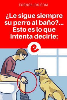 Lenguaje del perro | ¿Le sigue siempre su perro al baño?... Esto es lo que intenta decirle: | ¿Sabía esto?