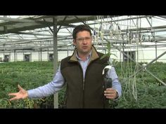 Truffle plant seedlings production PART 1 - YouTube