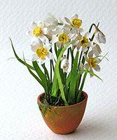Miniature Dolls' House Narcissus