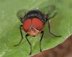 insect - Google Search