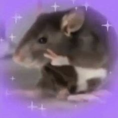 peace out babes Cute Animal Memes, Funny Animals, Cute Animals, Stupid Funny Memes, Haha Funny, Reaction Pictures, Funny Pictures, Memes Lindos, Response Memes