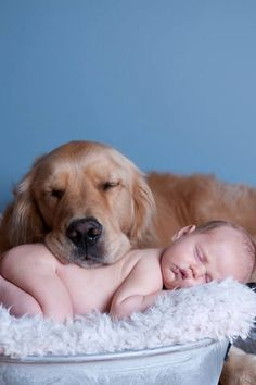 Rosco the Golden Retriever and baby pal