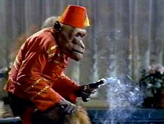 The fez wearing monkey spy in Last of the Secret Agents? Chimpanzee, Orangutan, Spanish Armada, Monkey Business, Primates, Funny Cards, Buisness, Kustom, Monkeys