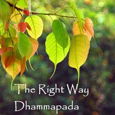 The Right Way: Dhammapada 11-16  Early Buddhist Podcast: Tune in on Nibbana.. https://soundcloud.com/bhikkhu-samahita/the-right-way-dhammapada-11-16  Soundcloud: https://soundcloud.com/bhikkhu-samahita/sets/early_buddhism iTunes: https://itunes.apple.com/lk/podcast/early-buddhism/id984989174 Stitcher: http://www.stitcher.com/podcast/bhikkhu-samahita Web: http://what-buddha-said.net/Podcast Pocket Casts http://pca.st/dJc6